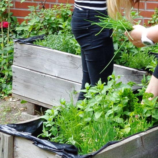Garten mal anders – Wie viele Berufe finden wir im Garten?