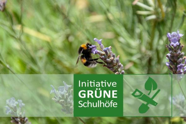Schulhof Begrünung Partizipativ Klimaschutz Klimaanpassung Berlin Baufachfrau
